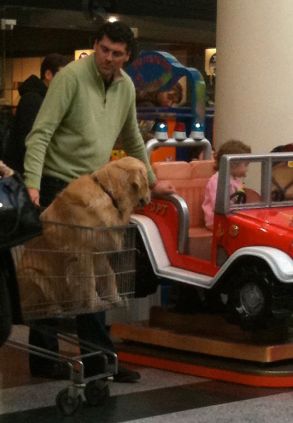 Man with dog in shopping cart in the mall