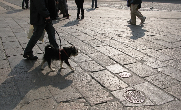 Dog and owner walking in piazza