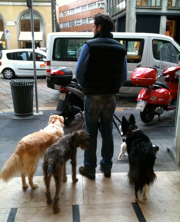 Dog walker with 4 dogs on Via della Spiga in Milan