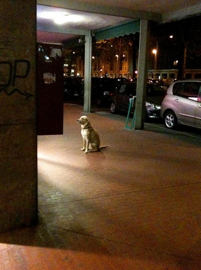 Loyal dog waiting patiently outside corner shop