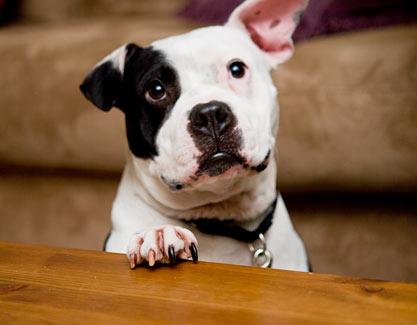 Ex-Vick dog Jonny Justice