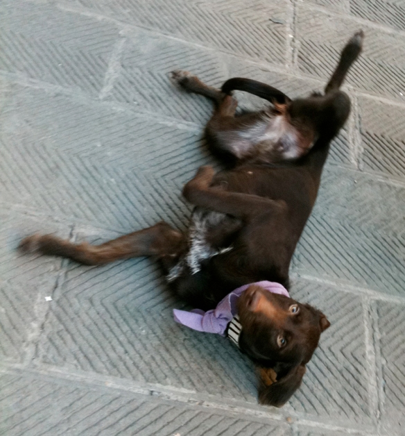 Chocolate Lab in Florence, Italy