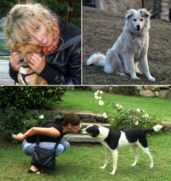 Save the Dogs and families