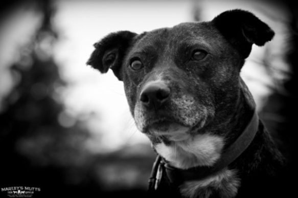 Adoptable Oscar for Marley's Mutts