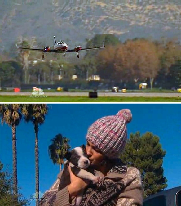 Plane, puppy and palms