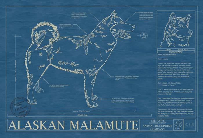 Animal Blueprint Company Alaskan Malamute