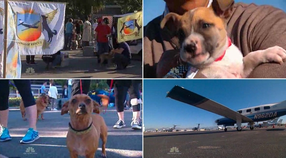 Volunteers, dogs and planes