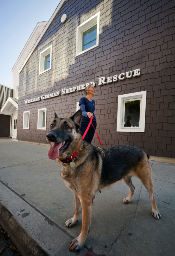 Westside German Shepherd Rescue, Los Angeles