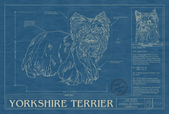 Yorkshire Terrier by Animal Blueprint Company