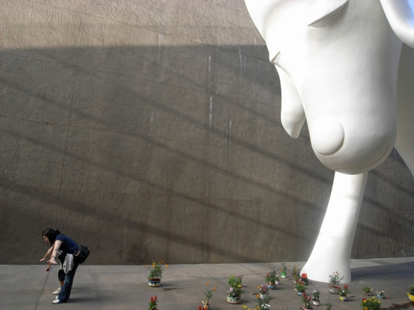 Yoshitomo Nara at Aomori Museum of Art