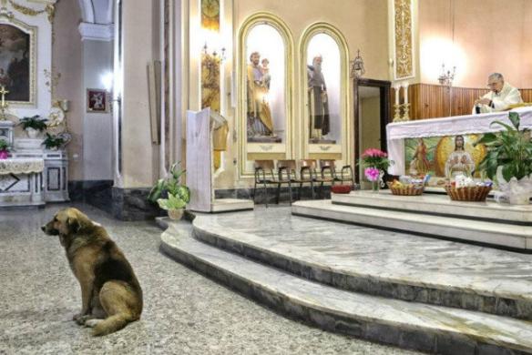 Ciccio at the altar