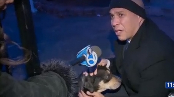 Mayor Cory Booker saves freezing dog
