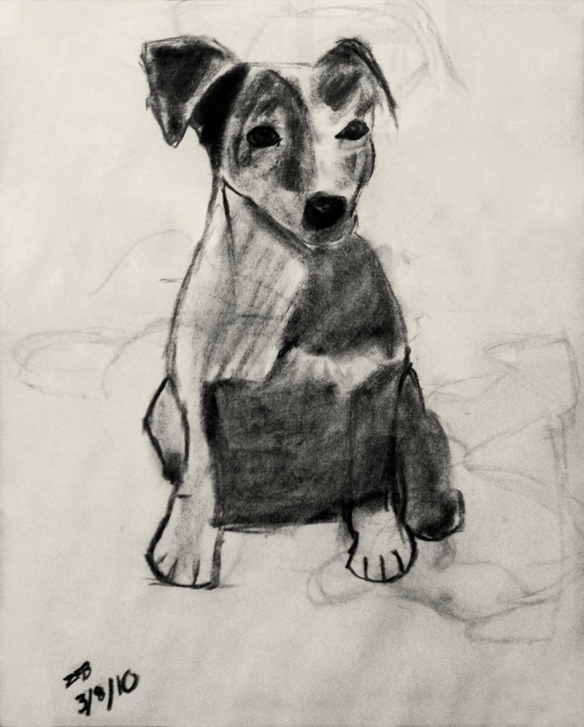 Zachary's Jack Russell