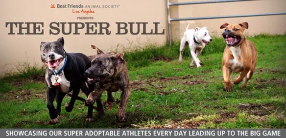 BFLA's Super Bull Campaign