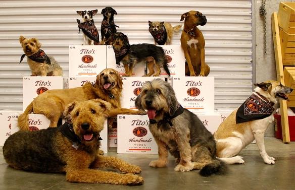 Tito's Dogs