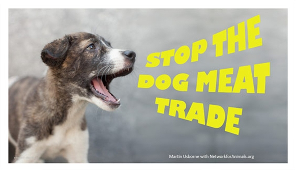 Stop the Dog Meat Trade by Martin Usborne