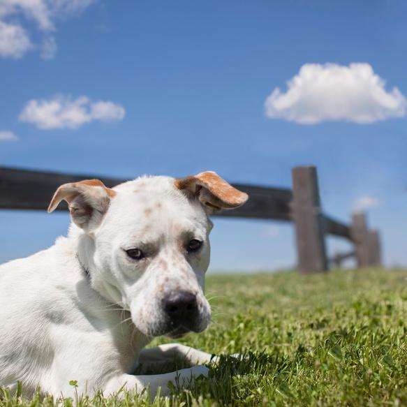 Roscoe from Wake County Animal Shelter