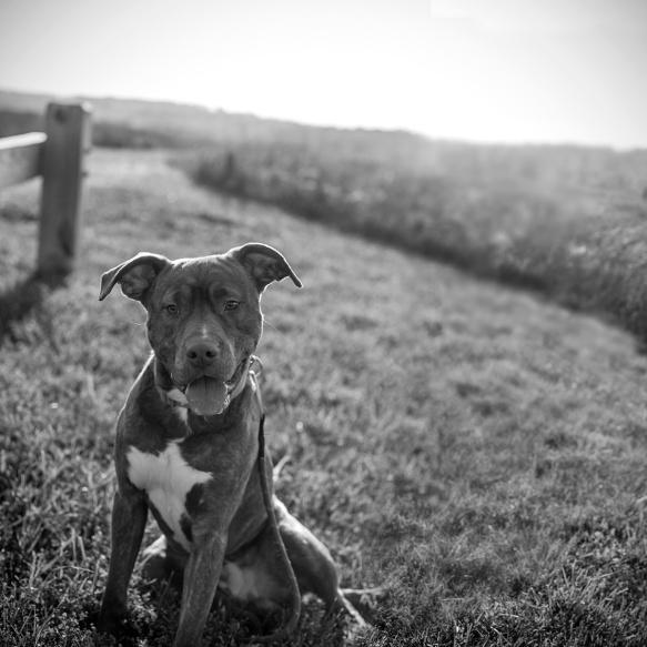 Ringo from Wake County Animal Shelter