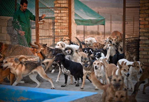 The gates at Vafa Animal Shelter in Iran