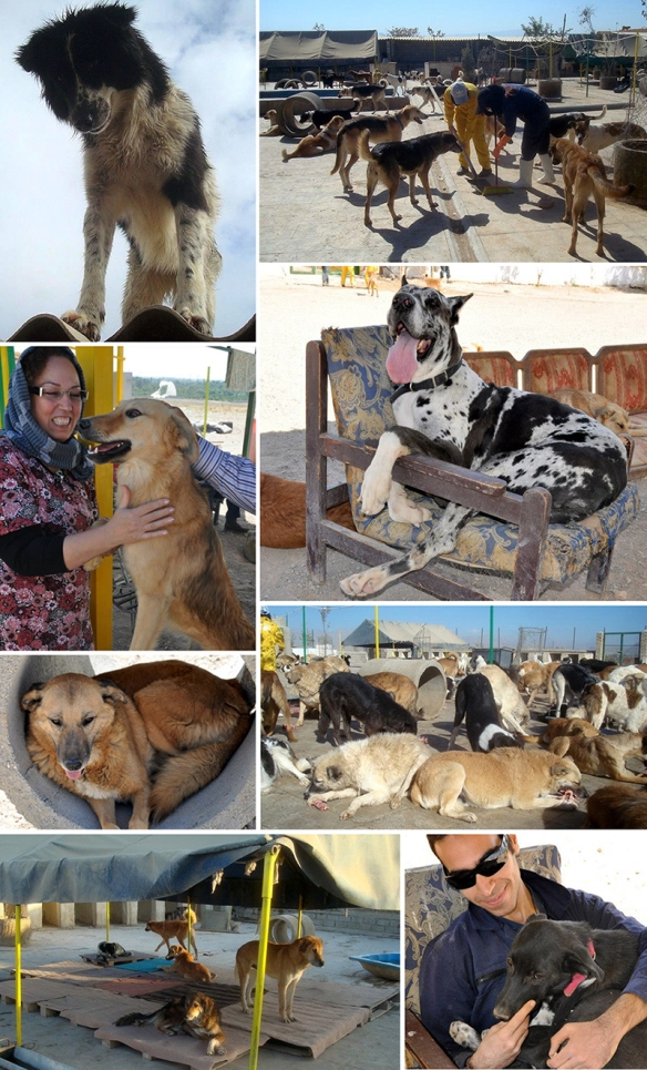 Vafa Animal Shelter in Iran