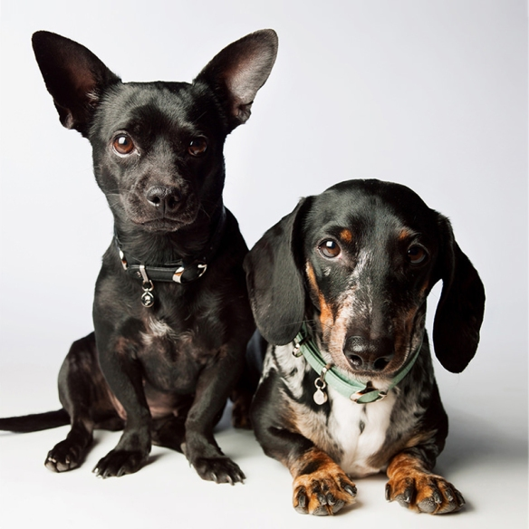 Photographer Amanda Jones' dogs Ladybug and Benny