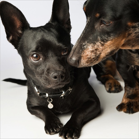 Photographer Amanda Jones' dogs Benny and Ladybug