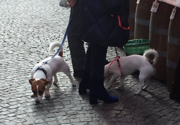 dogs_in_varese_02